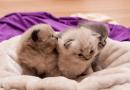 Top 5 Cutest Animals